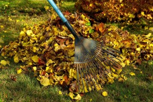 vt-property-maintenance-raking